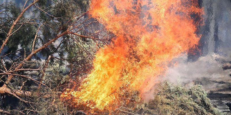Waldbrand bei Schweich